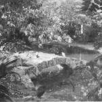 Zoological Gardens, India, January 1944