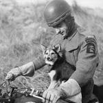 2/Lt. Adam Bachleda-Curus,  6 (Polish) Troop No.10(IA) Commando